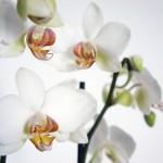 Frühjahrs(auf)putz