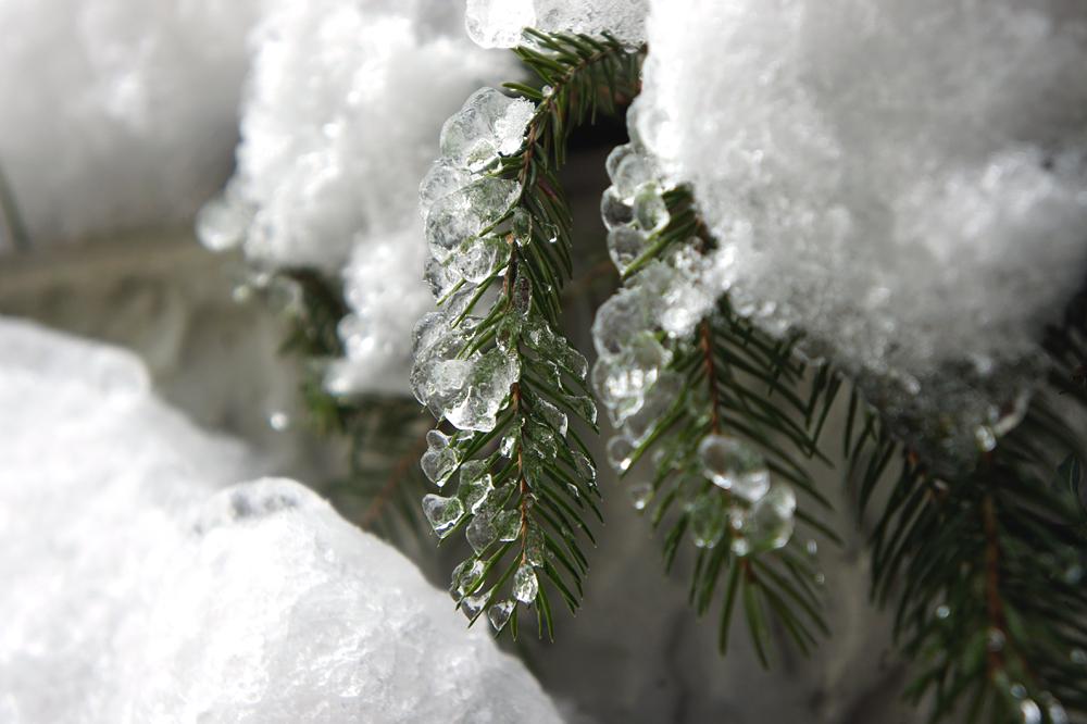 Winter Nadelbaum