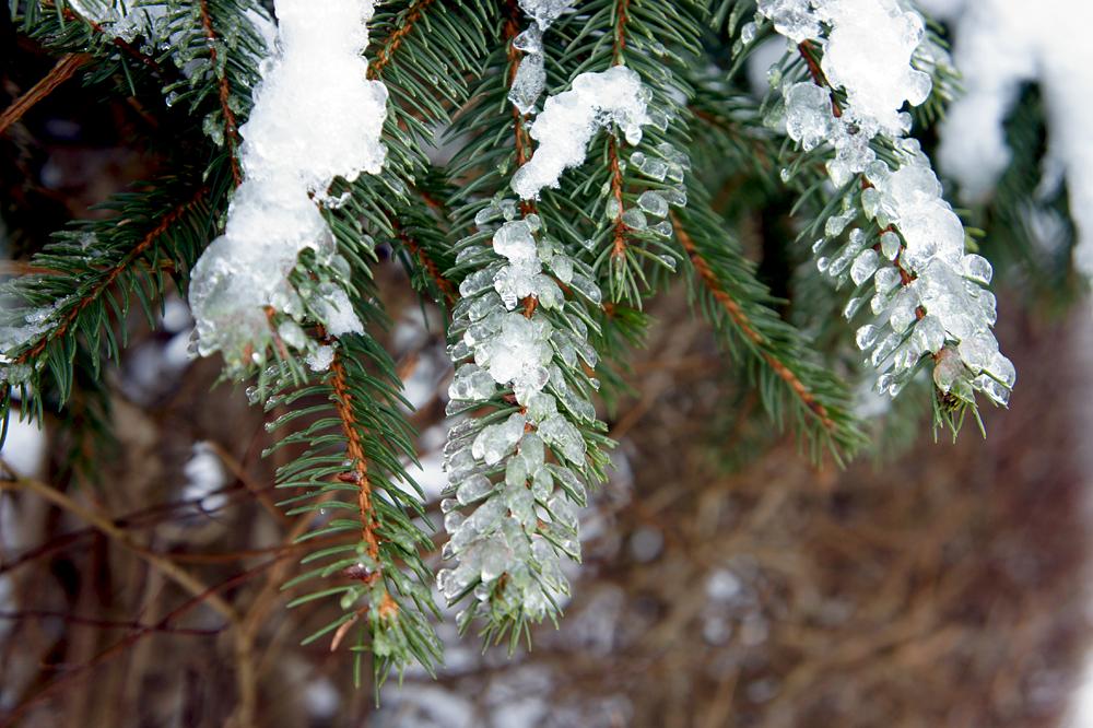 Fotos Winter