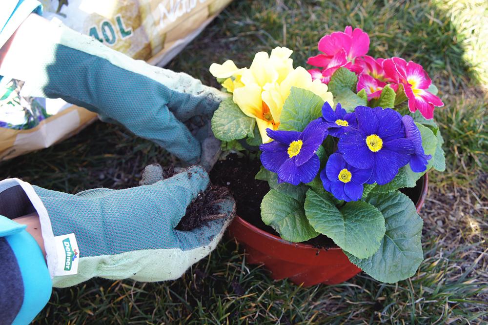 Blumen-Gugel