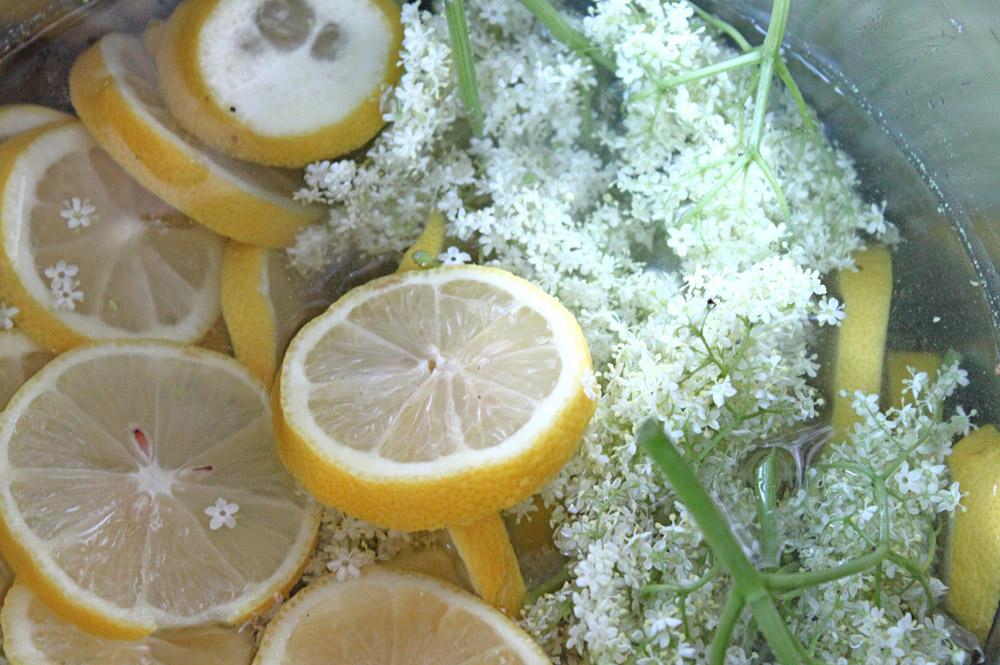Holundersirup | orangenmond.at